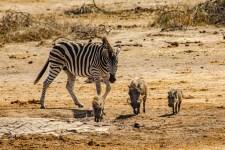 Südafrika 2019 2743 - Afrika - Ein Traum wurde wahr - urlaubsfotos, outdoor, offene-worte, non-commercial, naturfotos, natur, allgemein, alles, abseits-des-alltags -