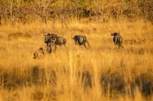 Südafrika 2019 295 - Afrika - Ein Traum wurde wahr - urlaubsfotos, outdoor, offene-worte, non-commercial, naturfotos, natur, allgemein, alles, abseits-des-alltags -