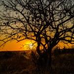 Südafrika 2019 354 - Shades of Grey lässt grüßen - offene-worte, modelle, allgemein, aktfotos - Geschenke, Frauen, Fetisch, erotische Porträts, Aktfotos