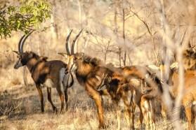Südafrika 2019 639 - Afrika - Ein Traum wurde wahr - urlaubsfotos, outdoor, offene-worte, non-commercial, naturfotos, natur, allgemein, alles, abseits-des-alltags -