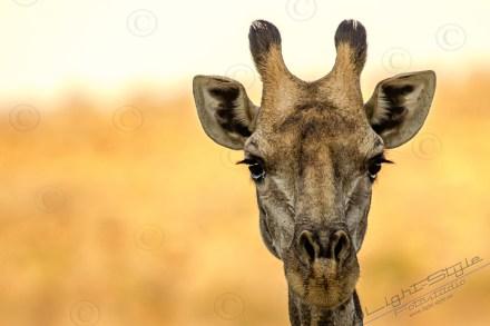 Südafrika 2019 726 - Afrika - Ein Traum wurde wahr - urlaubsfotos, outdoor, offene-worte, non-commercial, naturfotos, natur, allgemein, alles, abseits-des-alltags -
