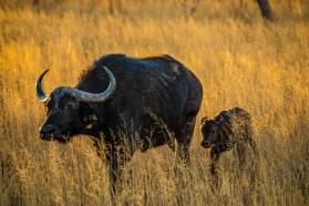Südafrika 2019 79 - Afrika - Ein Traum wurde wahr - urlaubsfotos, outdoor, offene-worte, non-commercial, naturfotos, natur, allgemein, alles, abseits-des-alltags -