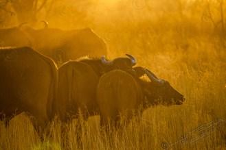 Südafrika 2019 93 - Afrika - Ein Traum wurde wahr - urlaubsfotos, outdoor, offene-worte, non-commercial, naturfotos, natur, allgemein, alles, abseits-des-alltags -