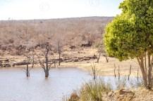 Südafrika 2019 951 - Afrika - Ein Traum wurde wahr - urlaubsfotos, outdoor, offene-worte, non-commercial, naturfotos, natur, allgemein, alles, abseits-des-alltags -