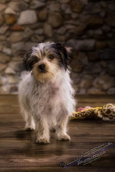 T20W0104 4 - Weiter gehts...... ;-) - tierportraets, allgemein - Tierporträts, Tierfotos, Hundeporträts, Hunde