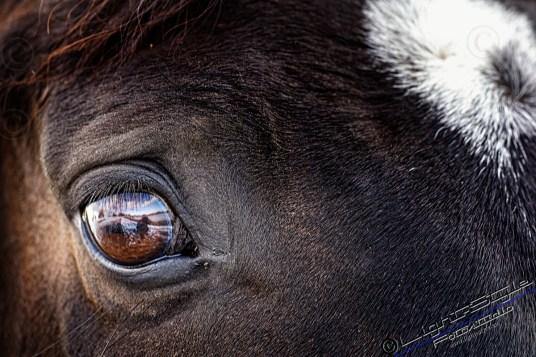 Pferdeaugen 2 - Neu - Tierporträt Faces - tierportraets, irisfotos, besondere-portraets, allgemein, alles, abseits-des-alltags - Tierporträts, Tierfotos, Pferde, Haustiere