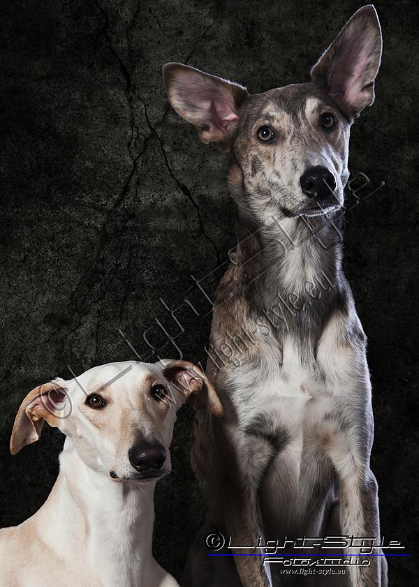 Haustiere Porträts