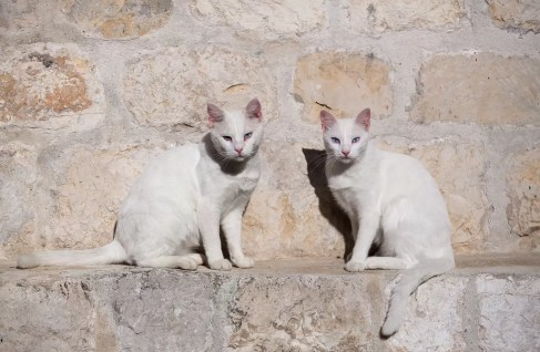 two cats in dubrovnik