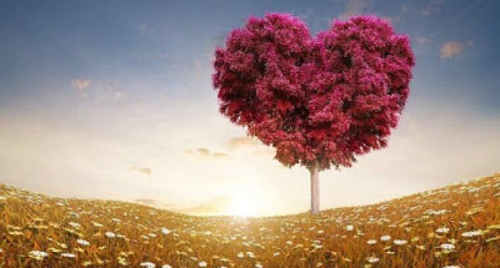 أين نحن من المحبة ! هل فقدنا إنسانيتنا وانتصر علينا الشرّ؟