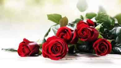 Photo of من هو القديس فالنتين St. Valentine وما هي حقيقة عيد الحب؟