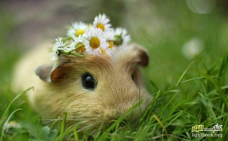هل تعلم ما فعله رفيق السوء الثعلب مع الأرنب المسكين ؟ قصة وعبرة