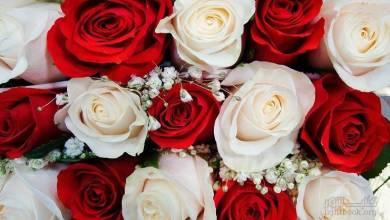 Photo of وردة حمراء و وردة بيضاء تزين قصر الحاكم! إنها علامة من الله
