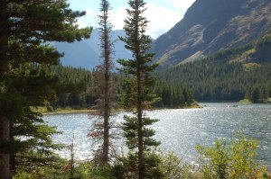 Pines and lake