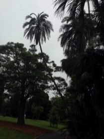Sidney - The Royal Botanic Gardens - 10