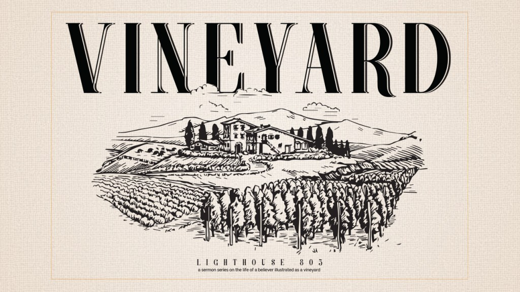 Vineyard in Ventura