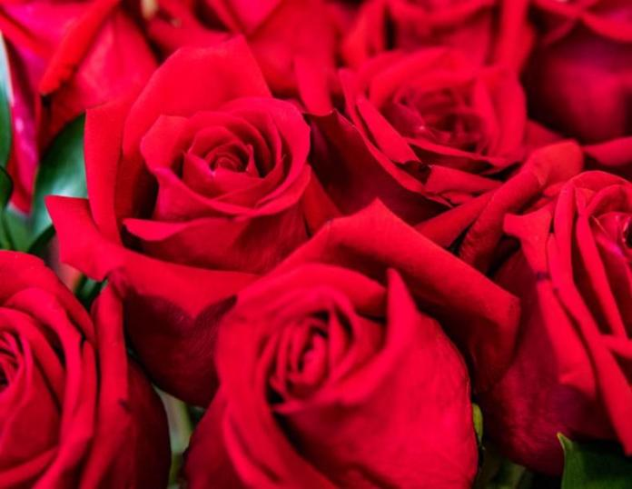 Majorland Rose Production