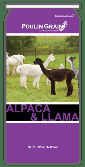 Northeast Alpaca and Llama maintenance feed
