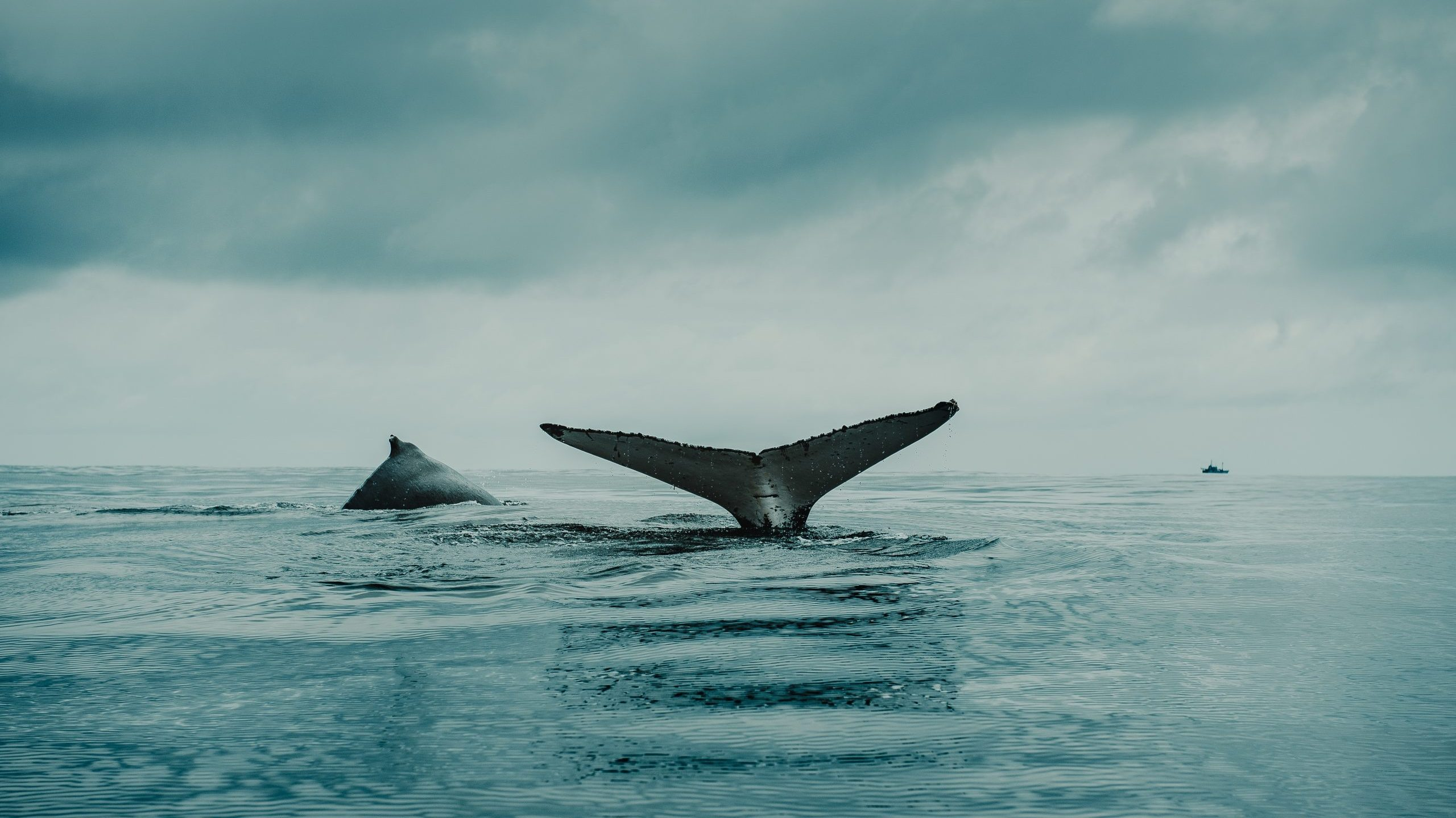 Whales pick up new songs