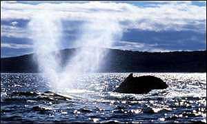 Whale in Ocean near Shore