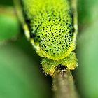 26 Very Cool Caterpillar Photographs