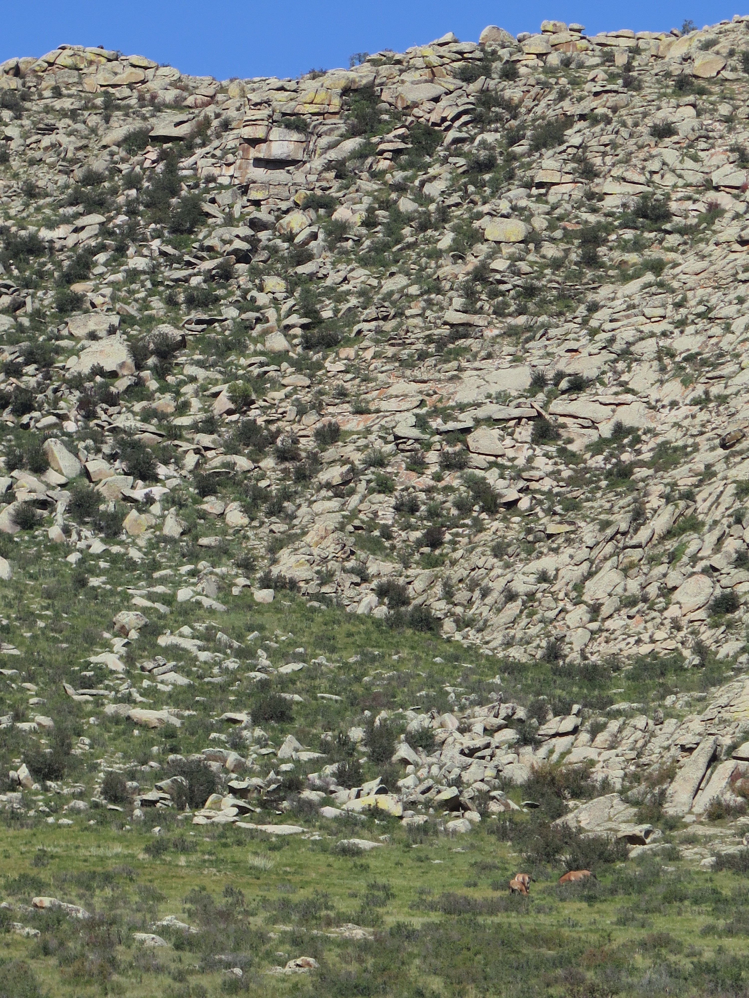 Find the horses in this photo (taken at maximum zoom)....