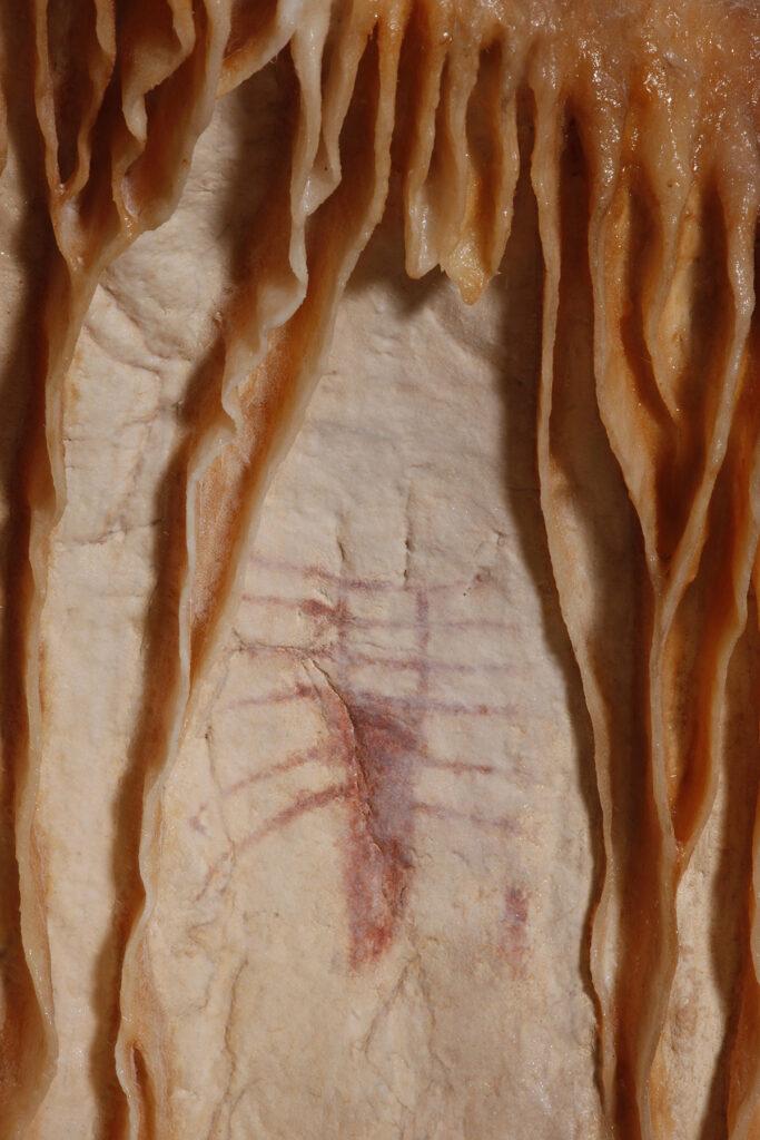 Concrétion aux insectes, détail © Patrick Aventurier - Caverne du Pont d'Arc