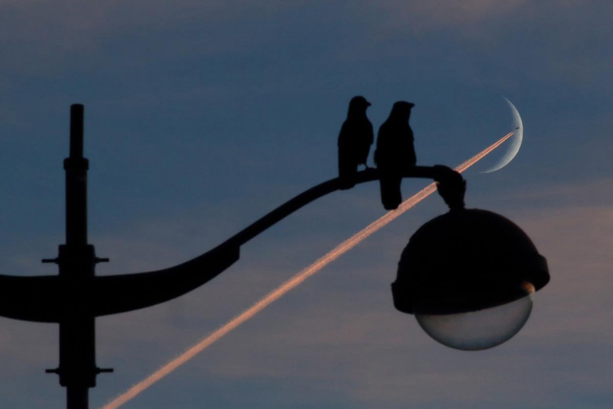 Crosse d'éclairage public, luminaires et pigeons en silhouettes - Entre Ciel et Terre, exposition, Galerie Orenda, Paris © Bertrand Kulik