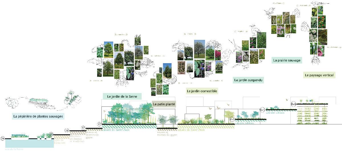 Biodiversité locale résiliente, cœurs d'îlot Belvédère et Villas, village des athlètes, Lot E, Jeux de Paris 2024
