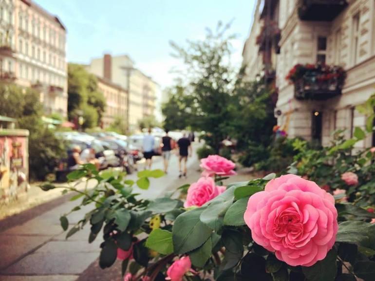 #paracegover Descrição para deficientes visuais: a imagem mostra minha rua preferida na cidade; larga, com seus prédios antigos restaurados e muito arborizada, a Oderbergerstraße é puro charme. Em primeiro plano, um canteiro de rosas na calçada. — at Oderberger38.