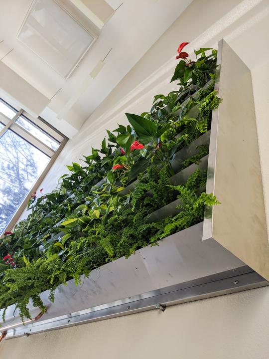 Mur végétal - modulaire - La ligne verte (11)