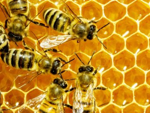 Corso per apicoltore a Genova