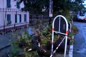 albero abbattuto in corso Solferino a Castelletto