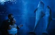 Giurarsi amore eterno tra i delfini, da oggi sarà possibile sposarsi all'Acquario di Genova
