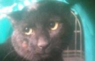 Millesimo, gatto rimane bloccato in una cantina: salvato dai Vigili del Fuoco