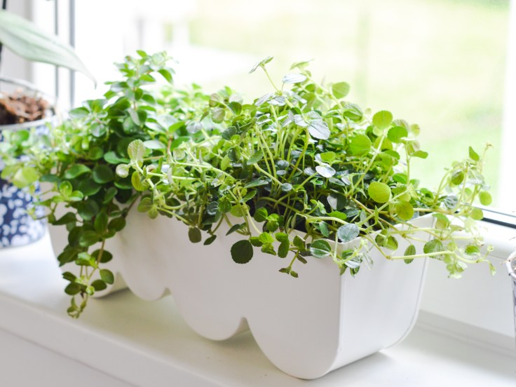 zeleni balkon (6)