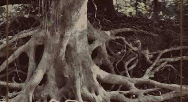 Destroy the Roots of Shame Based Living – The Lie of Perfection