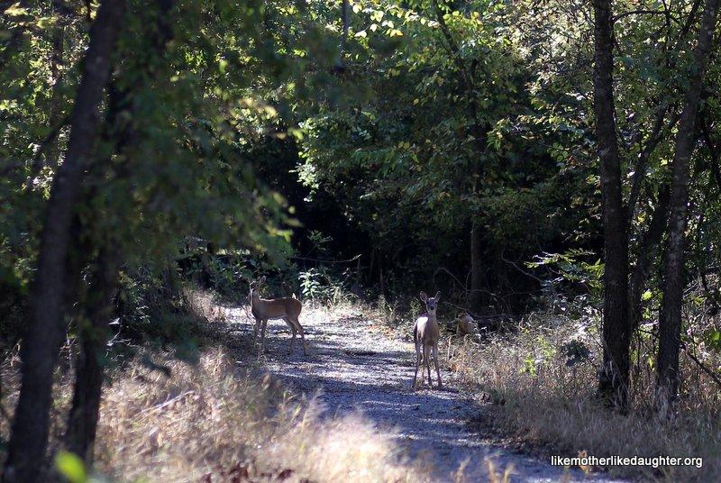 Nature Walk 10-14-2015 10-41-36 AM