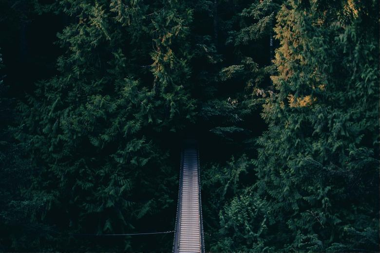 Uma estrada levando à floresta.