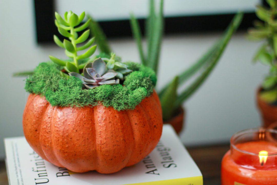 Pumpkin Succulent Centerpieces
