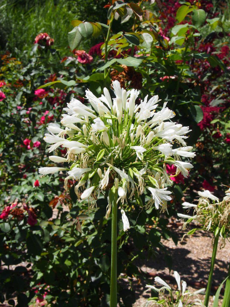 Fleur - Jardins des Martels