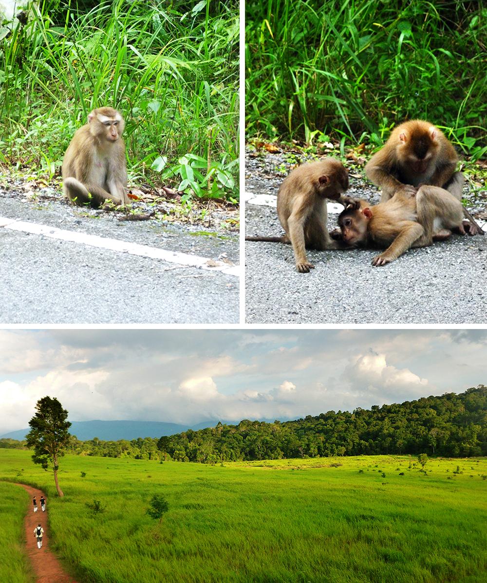 Khao Yai National Park, Thailand