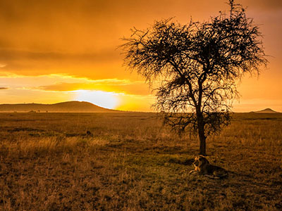 IN PHOTOS – A safari in Serengeti National Park, Tanzania