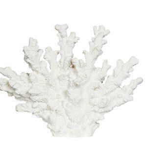 Korall Poly vit