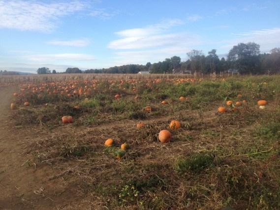 Sandy River Farms - Farmington, ME