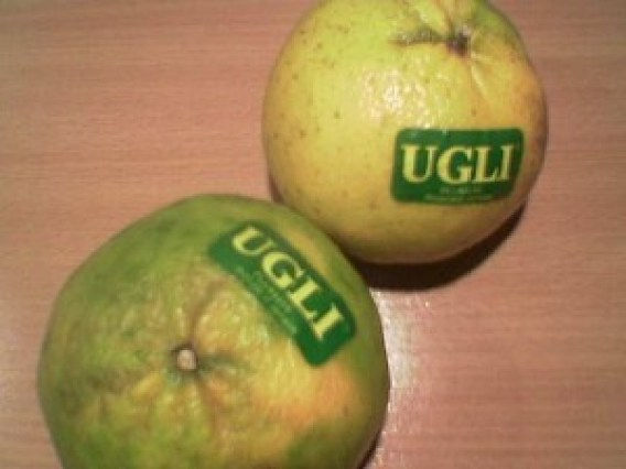 Ugli Fruit]