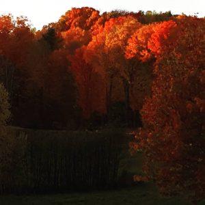 sun-setting-on-fall-leaves