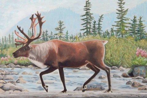 Losing Woodland Caribou Art Card