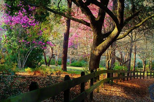 Spring, Raleigh, North Carolina