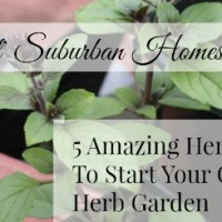 5 Amazing Herbs To Start Your Own Herb Garden