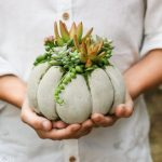 Succulent Pumpkin Diy With Concrete Using Tights Done In 20 Minutes